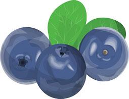 Blaue Früchte